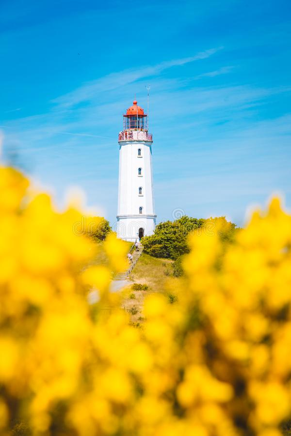 Lighthouse Dornbusch on the island Hiddensee, Ostsee, Germany. Classic view of famous Lighthouse Dornbusch on the beautiful island Hiddensee with blooming royalty free stock image