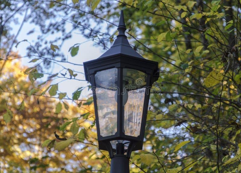 Lighting, Bird Feeder, Tree, Branch royalty free stock photos