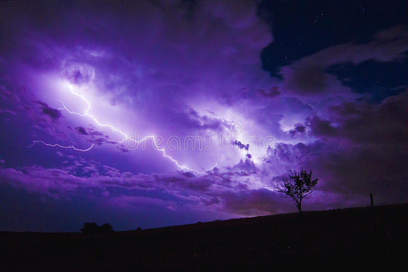 Lightning Behind Small Tree royalty free stock images