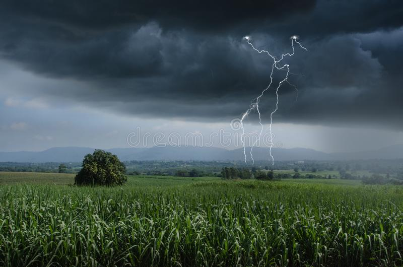 Lightning and raining over green sugar cane farm stock photo