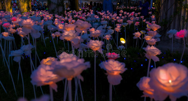 Lightning Roses royalty free stock photo