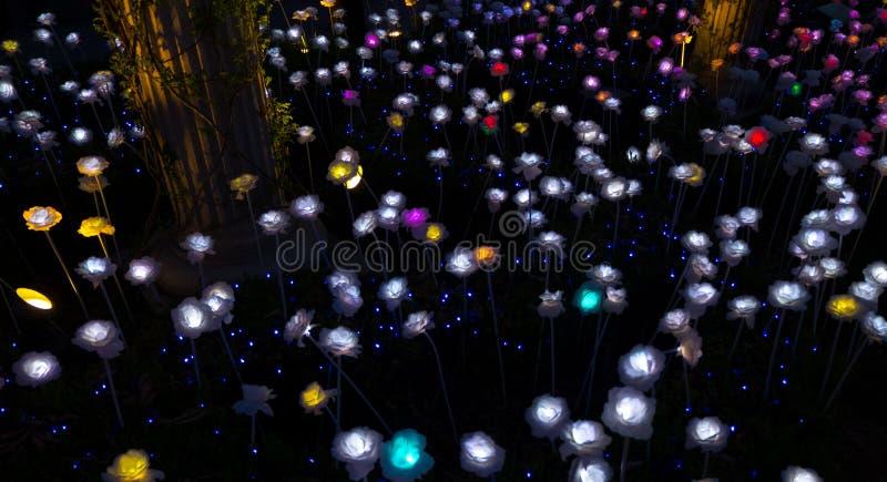 Lightning Roses stock photo