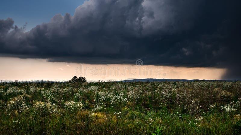 Lightning storm over a summer field stock image