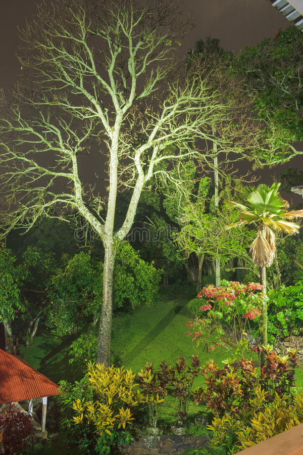 Download The lightning tree stock photo. Image of colombia, picture - 92590374
