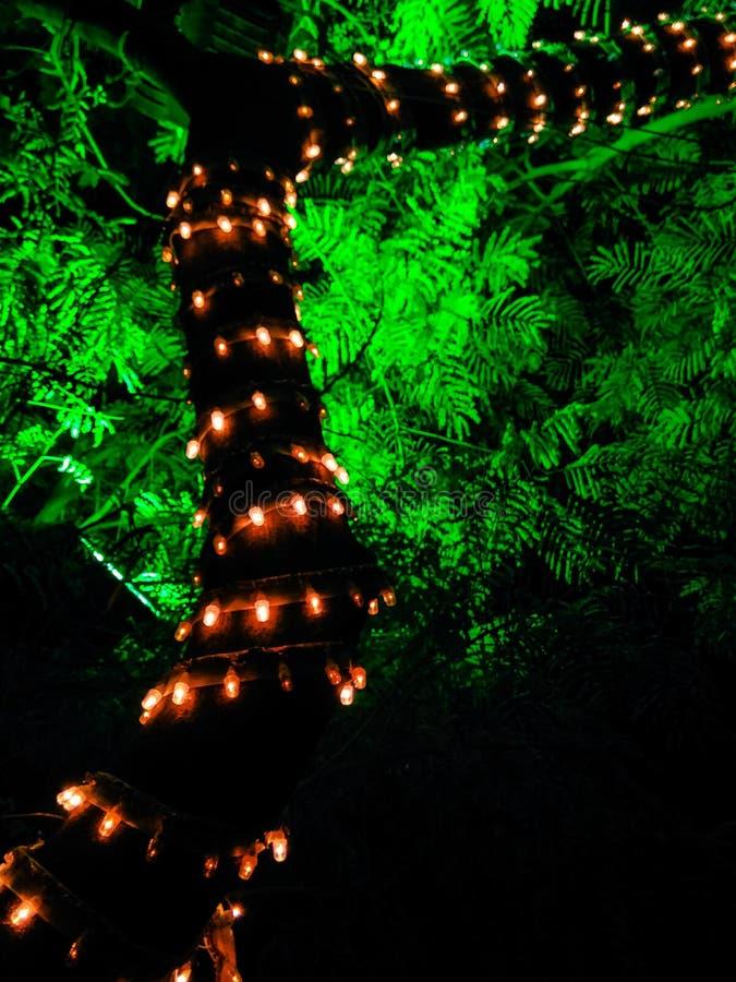 Lightning trees royalty free stock photography
