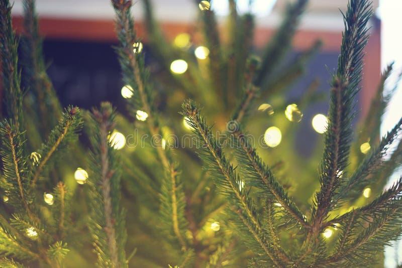 Lights and Christmas tree. Nature, sparkle, xmas stock photography