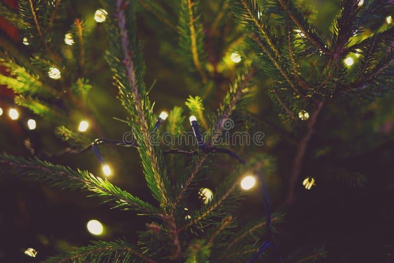 Lights and Christmas tree. Nature, sparkle, xmas stock photos