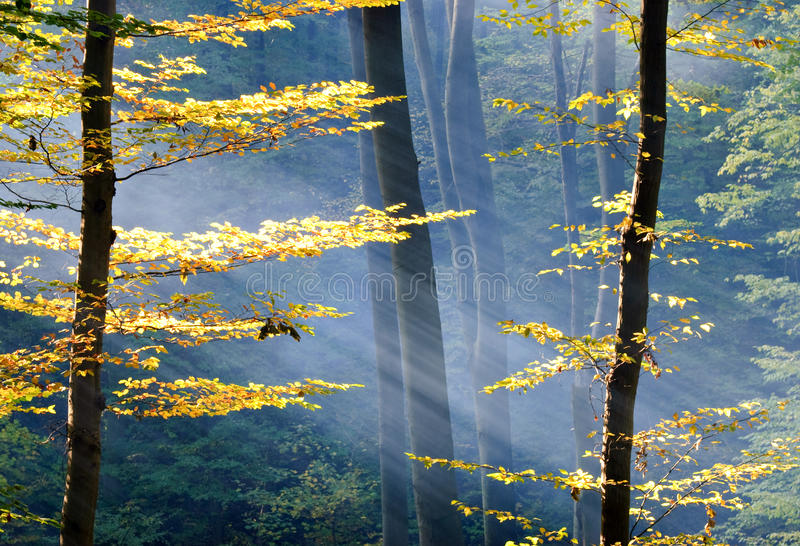 Lights of the forest royalty free stock photography