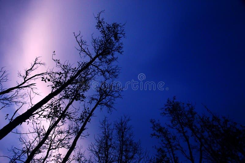 lights northern sky royaltyfria foton