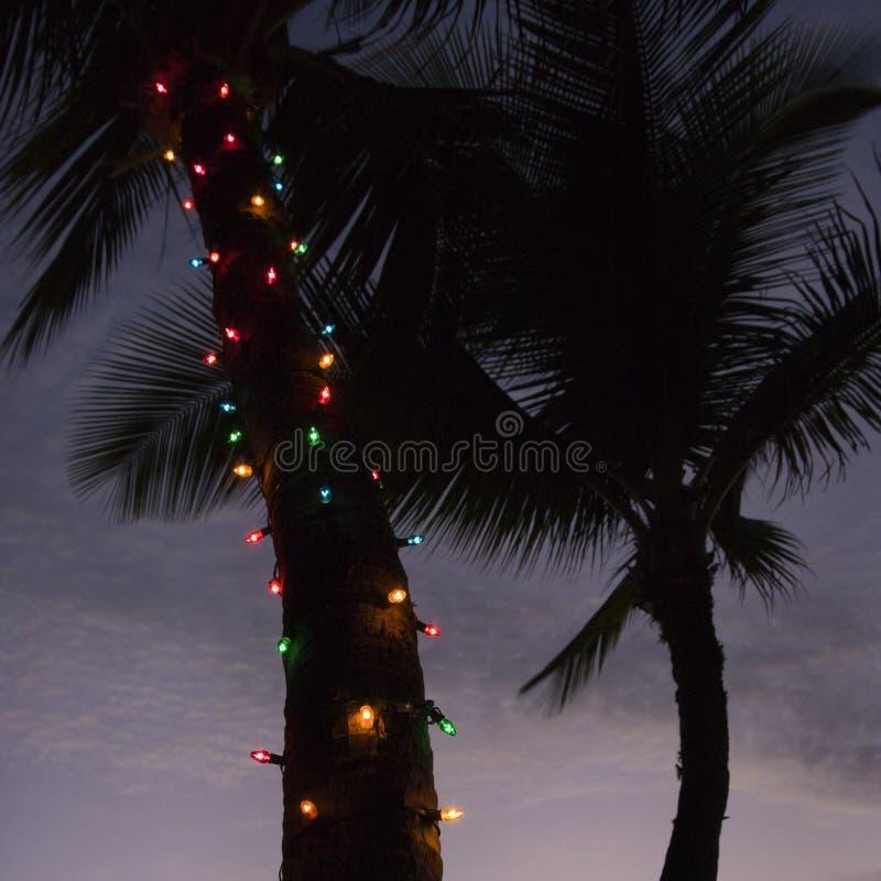 Lights on palm tree. stock photography