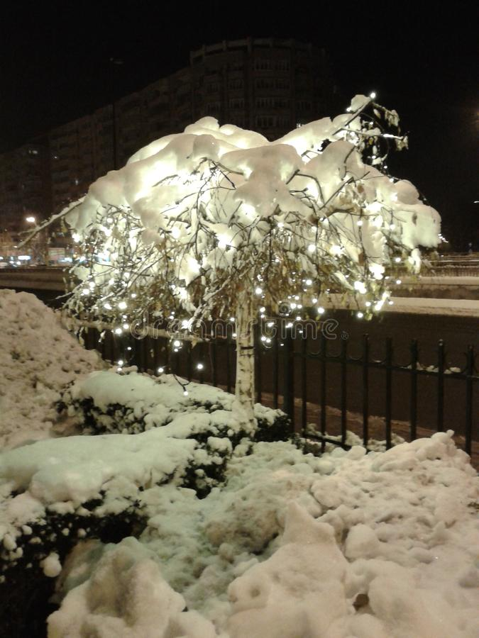 Lights in the tree. Lights in a tree full of snow royalty free stock photo