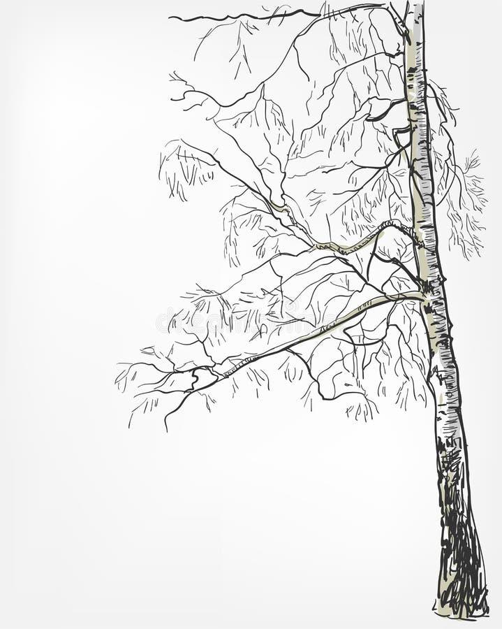 Ligne arbre de croquis de vecteur de fond de bouleau d'aquarelle illustration libre de droits