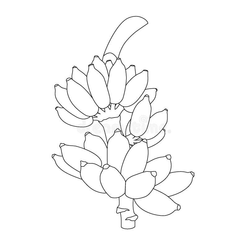 Ligne banane sur le vecteur blanc d'illustration de fond illustration stock