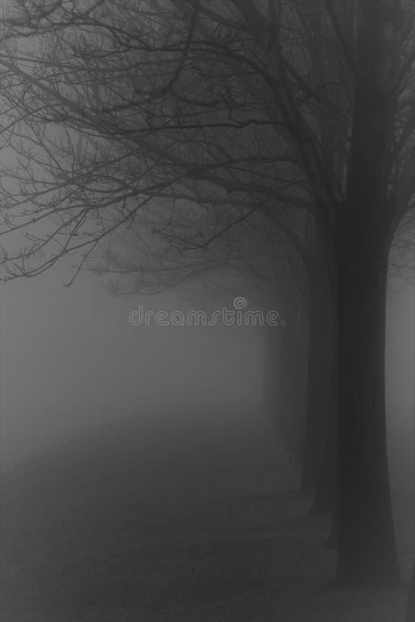 Ligne d'arbre brumeuse images libres de droits