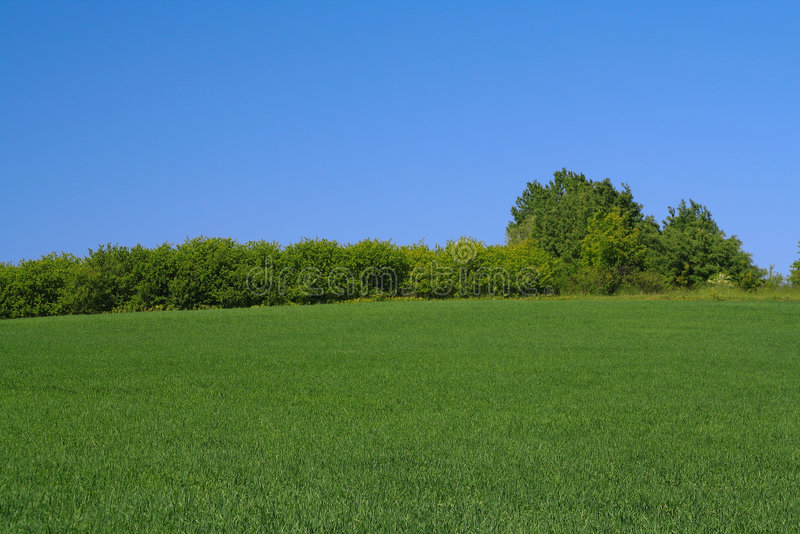 Ligne d'arbre sur le bord d'un pré parfait photo stock