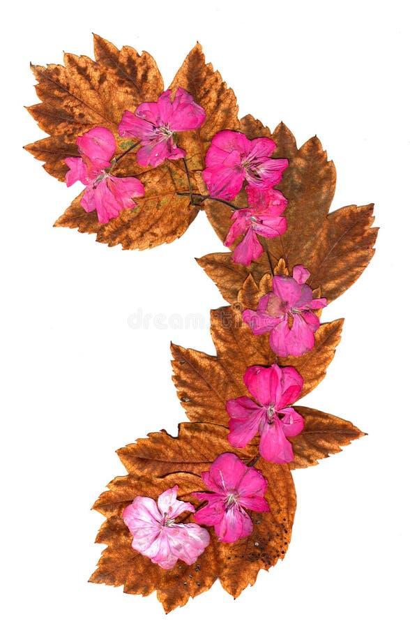 Ligne d'isolement géranium de rose, collection de vague d'applica d'éléments photos libres de droits
