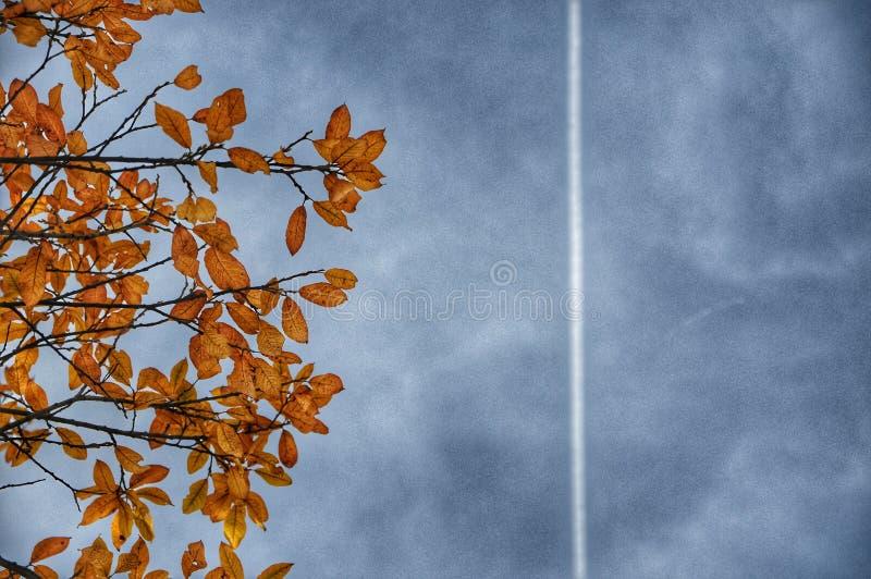 Ligne de Contrail dans le ciel au-dessus de l'arbre images stock
