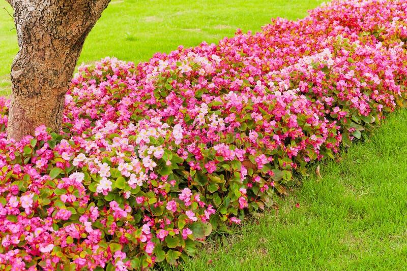 Ligne de fleurs images libres de droits