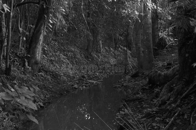 Download Ligne De Flottaison De Forêt Image stock - Image du blanc, forêt: 87706951