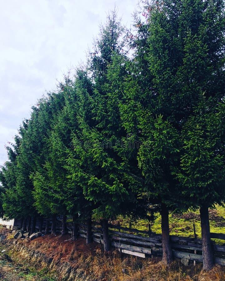 Ligne de forêt photo libre de droits