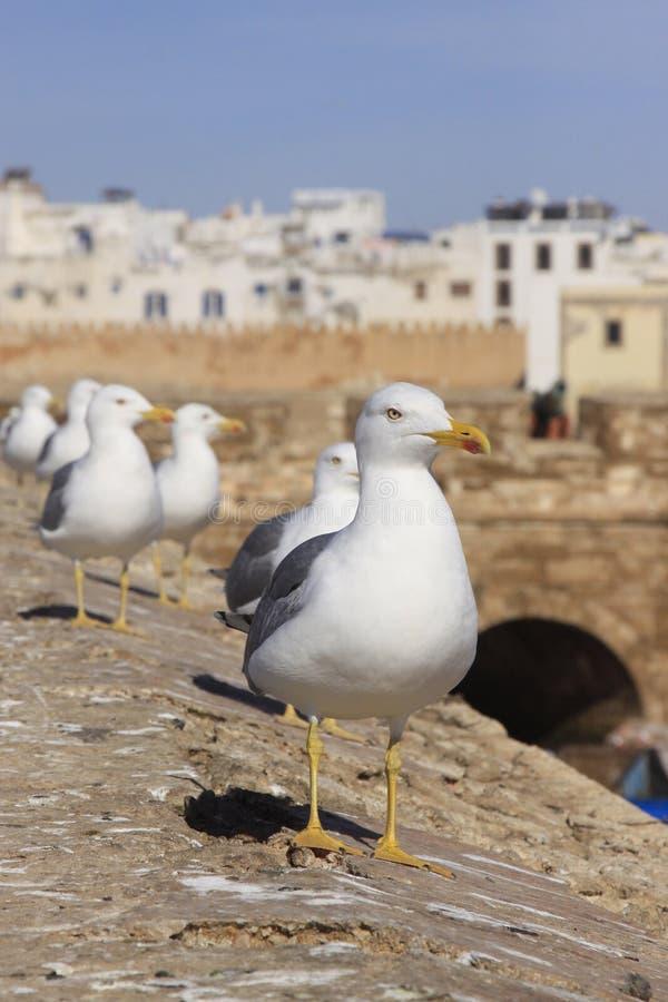 Ligne de garde de mouette la forteresse d'Essaouira, Maroc Essaouira est une ville dans la région marocaine occidentale sur photos stock