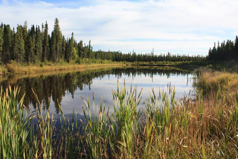 Ligne de partage boréale de forêt images libres de droits