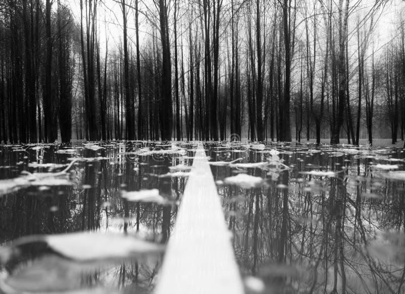 Ligne de séparation de route d'automne après fond de pluie images libres de droits