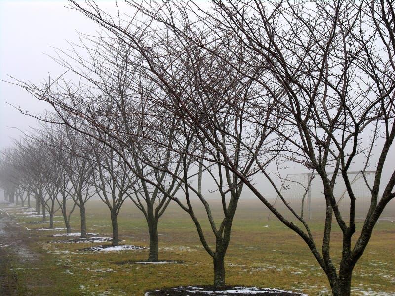 Download Ligne des arbres photo stock. Image du seul, desktop, fermes - 60158