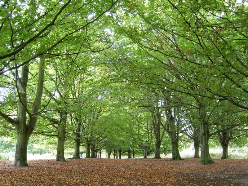 Ligne des arbres en parc royal photographie stock libre de droits