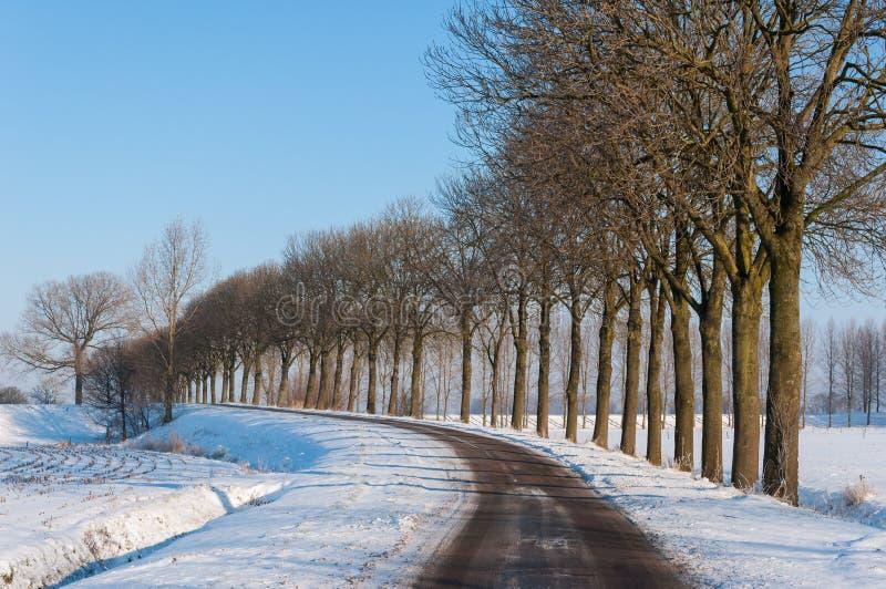 Ligne des arbres nus sans compter qu'une route de campagne en hiver photographie stock libre de droits
