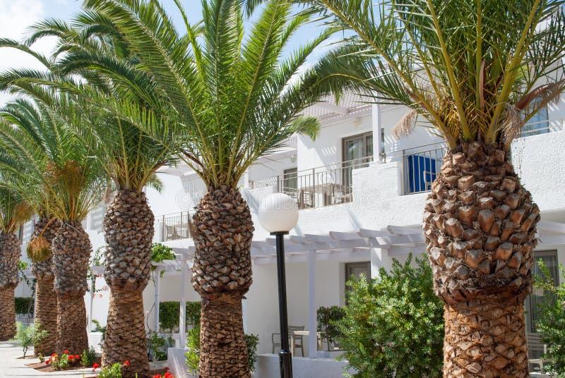 Ligne des palmiers image libre de droits