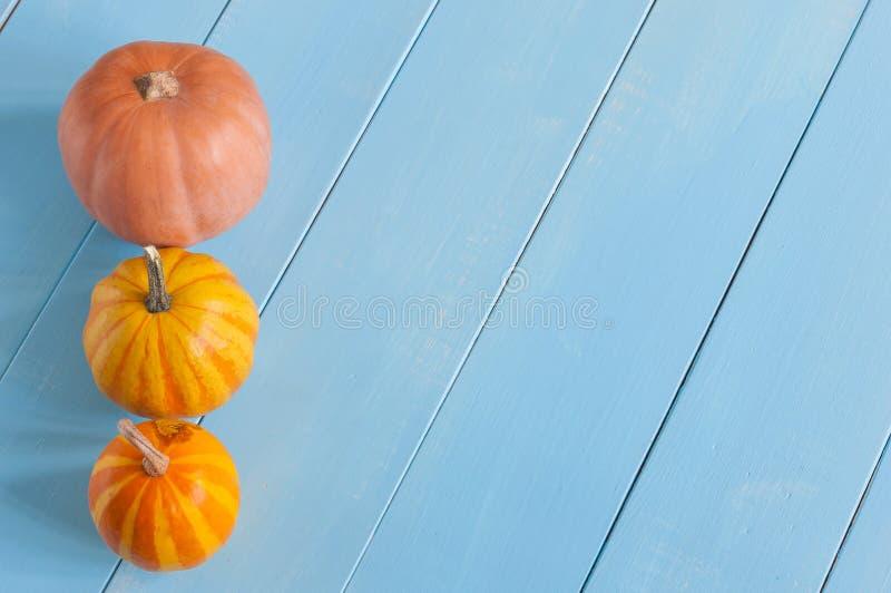 Ligne des potirons oranges miniatures Avec vide photos stock