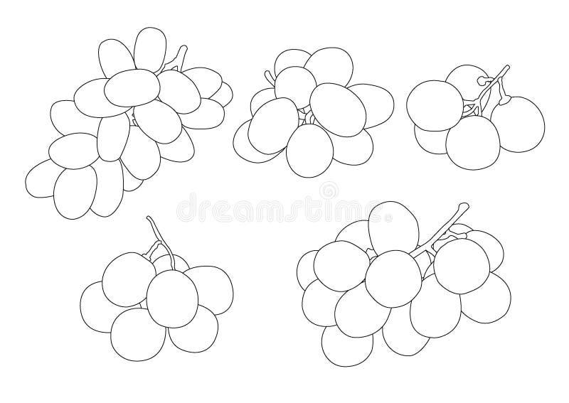 Ligne groseille de raisin et fruit de raisin sec sur le fond blanc illustration de vecteur