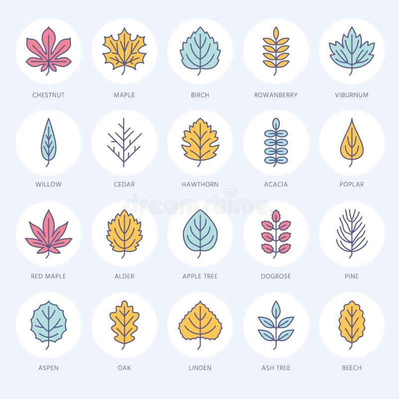 Ligne plate icônes de feuilles d'automne La feuille dactylographie, sorbe, arbre de bouleau, érable, châtaigne, chêne, pin de cèd illustration de vecteur