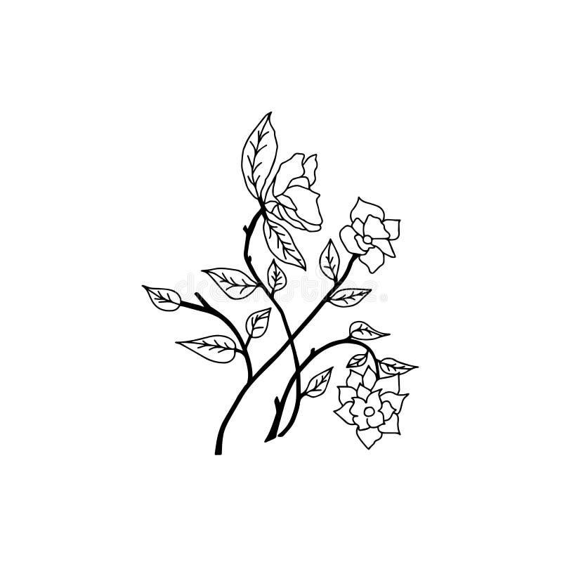 Ligne tirée par la main vecteur, art de roses, logo de Rose d'illustration illustration de vecteur