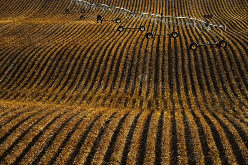 Lignes d'eau d'irrigation croisées dynamiques sur le sol de la ferme aménagée image libre de droits