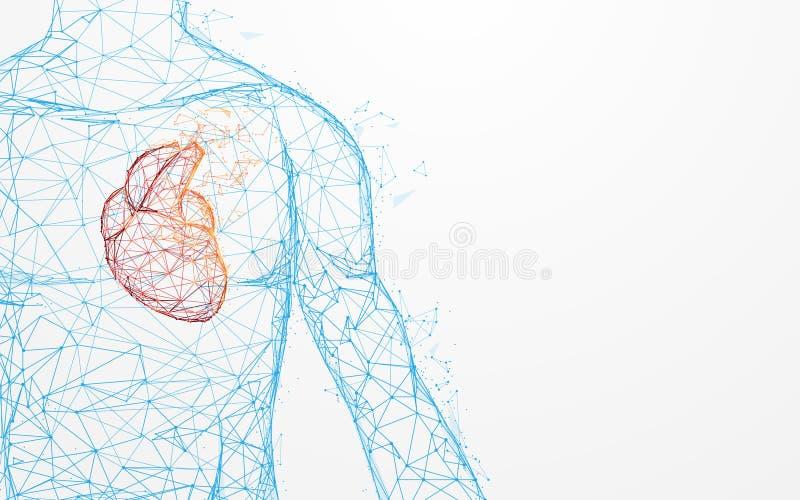 Lignes de forme d'anatomie de coeur et triangles humaines, réseau se reliant de point sur le fond bleu illustration libre de droits