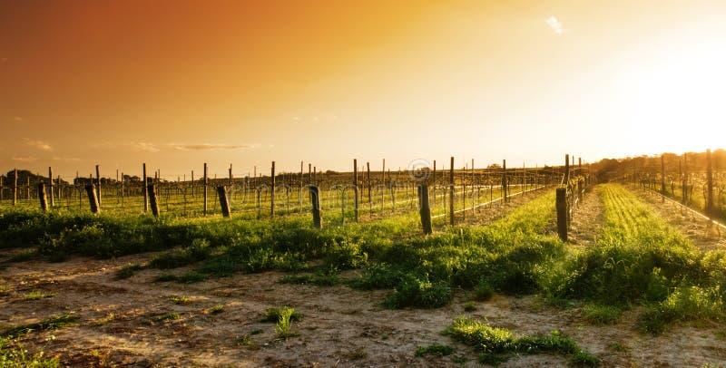 Lignes de vigne photos stock