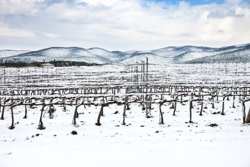 Lignes de vignobles couvertes par la neige en hiver. Chianti, Florence, Italie images libres de droits