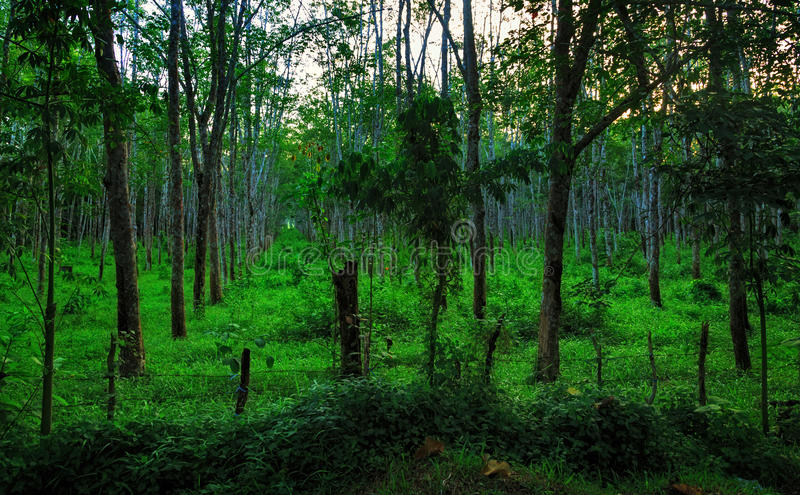 Download Lignes des arbres photo stock. Image du ciel, centrales - 45358238