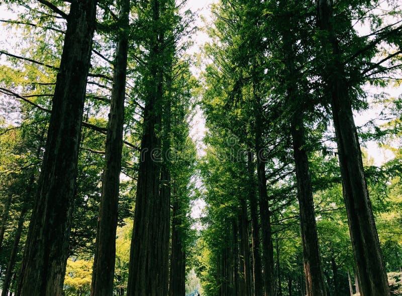Lignes des arbres photo libre de droits