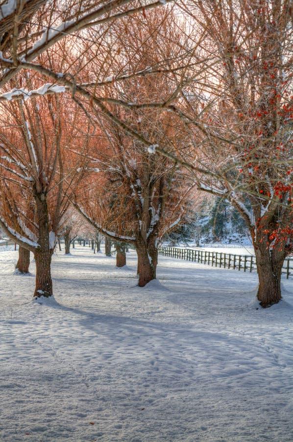 Lignes des arbres dans le domaine neigeux. image stock
