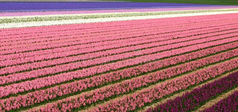 Download Lignes des fleurs photo stock. Image du valentine, horizon - 738012