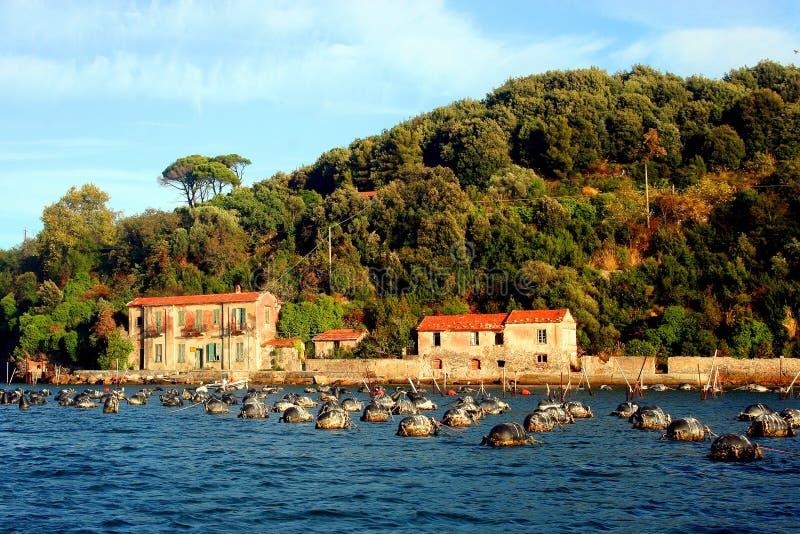 Liguria: spławowe sieci rybackie w morzu przed wybrzeżem Palmaria wyspa z budynkami i wzgórzem z drzewami zdjęcie stock
