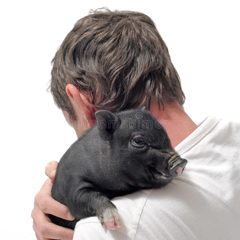 Liitle piggy and man stock photo