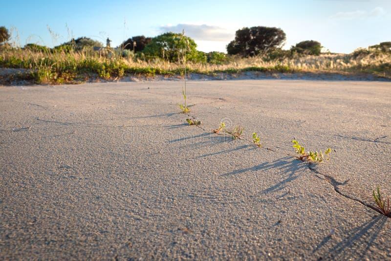 Lije (en seco) la superficie con una grieta, paisaje del arbusto fotografía de archivo