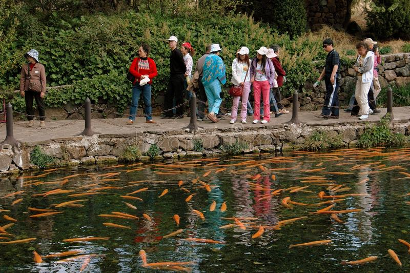 Download Lijiang Twp, China: Giant Carp In Temple Pond Editorial Photo - Image: 26511476