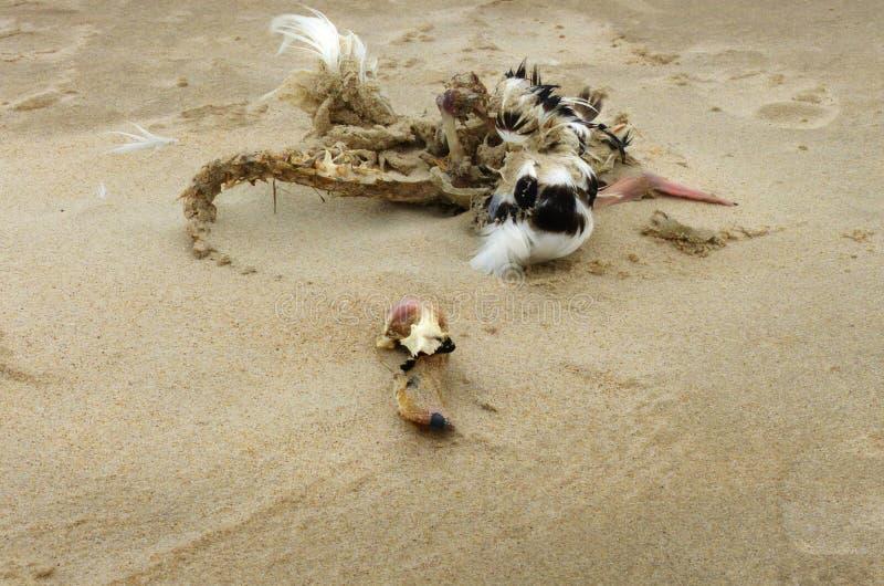 Lijk van een vogel op het strand stock afbeelding