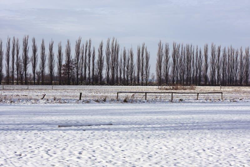 Lijn van bomen achter sneeuw behandeld gebied stock afbeeldingen