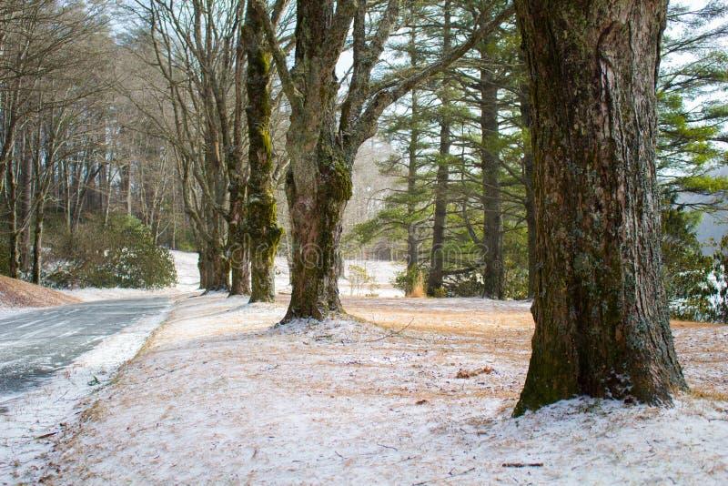 Lijn van bomen langs een het lopen weg royalty-vrije stock foto's